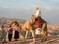 Camel%2520robert
