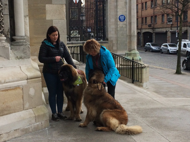 Dogs visit St Anne's during Cathedral Quarter tour