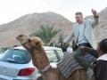 Camel%2520Jon