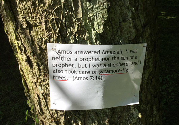 'Worship in the Woods' at Carnmoney